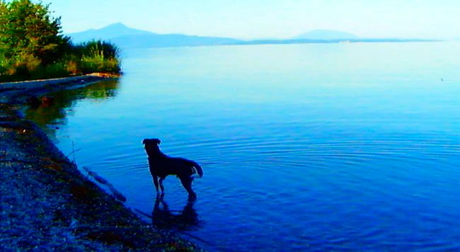 In Goodbye to Language Jean-Luc Godard's dog stands in a lake