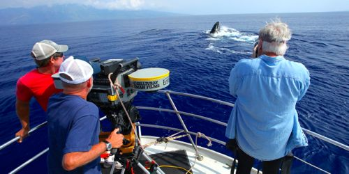 Greg MacGillivray's crew films whale from prow of boat